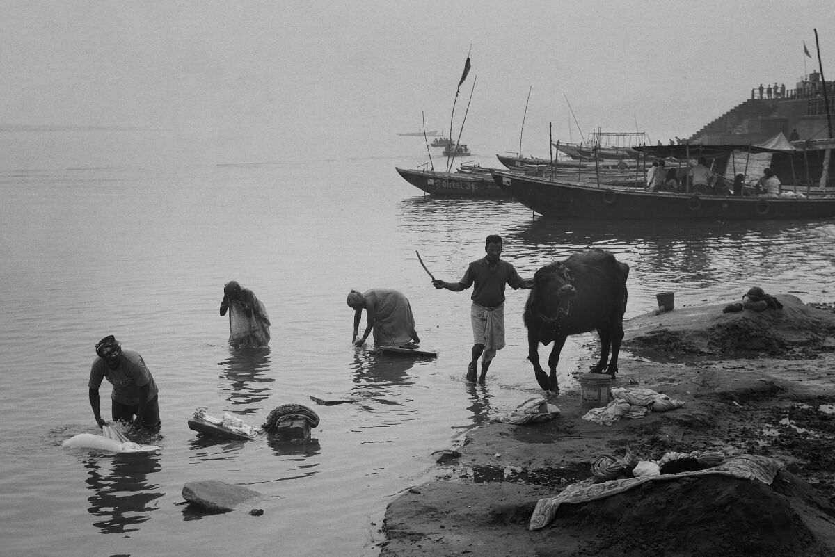 Early Morning Laundry. River Ganges. Varanasi.