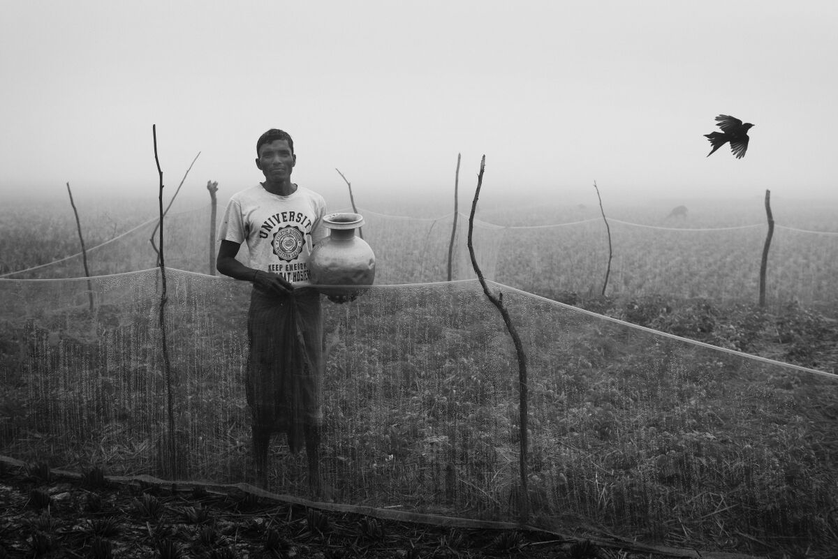 The Potato Farmer. Sundarbans, West Bengal. India.